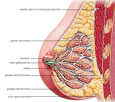Piercing au téton : Informations avant de se faire percer